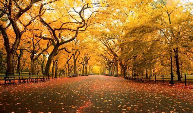 Tiếng thu Lưu Trọng Lư - Bức tranh mùa thu khắc khoải man mác buồn
