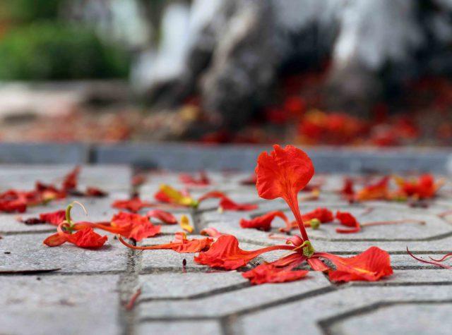 Thơ về mái trường - Tuyển tập những bài thơ gợi kỉ niệm dấu yêu