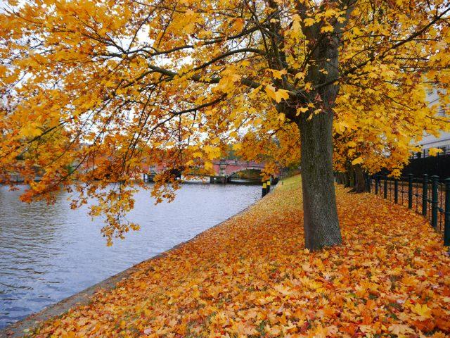 Bài thơ Duyên mùa thu